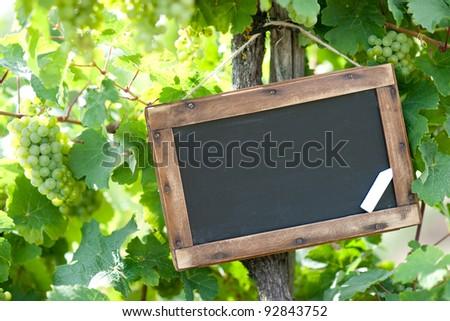Blackboard - grapevine