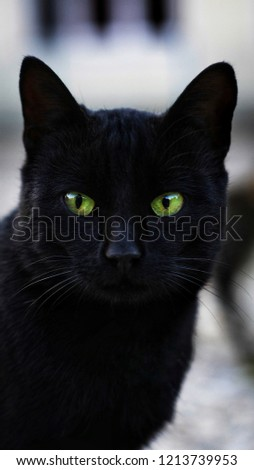 blackcat with green eyes
