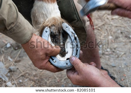 Blacksmith at work while changing a horseshoe - stock photo