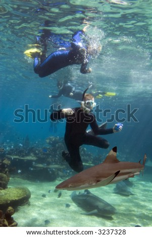 Blacktip Reef Shark (Carcharhinus melanopterus), with divers taking photo.