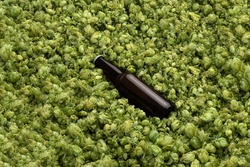 Blank beer bottle on the green hops background, craft beer mockup templates, with empty space to place your label or design