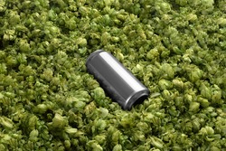 Blank beer can on the green hops background, craft beer mockup templates, with empty space to place your label or design