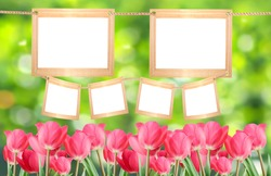 Blank frames on a background of red tulips and green bokeh. Frames for your photos.