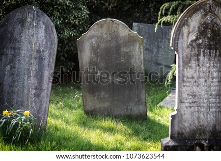 Blank gravestone in graveyard. Old, decayed and grunge, ready for text. Trees and bushes in background. - Shutterstock ID 1073623544