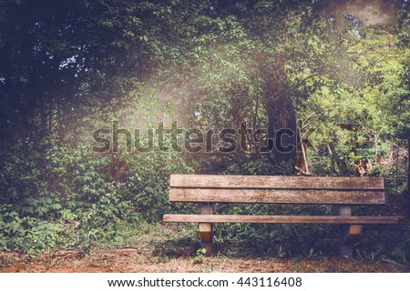 Blank Old wooden bench in a shady area of the garden or the park, outdoor