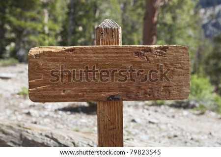 Blank old wooden trail sign in a pine forest.