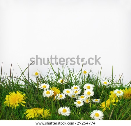 Blank paper and flower in front of