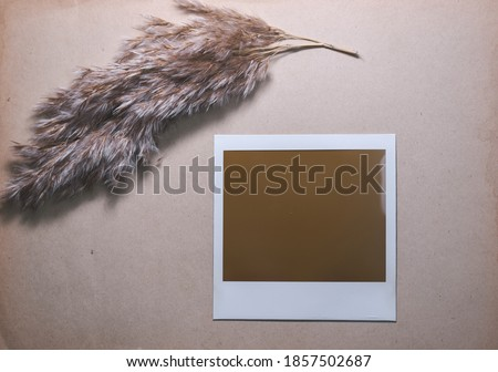 Blank photo frame with reed isolated on brown background as template for graphic designers cards, memories. Photo card with space for your logo or text.