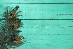 Blank rustic antique mint green wood sign with peacock feathers