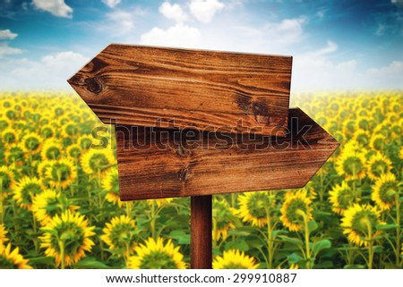 Blank Rustic Opposite Direction Wooden Sign in Blooming Sunflower Field, Concept of Choice, Choosing Your Life Path.