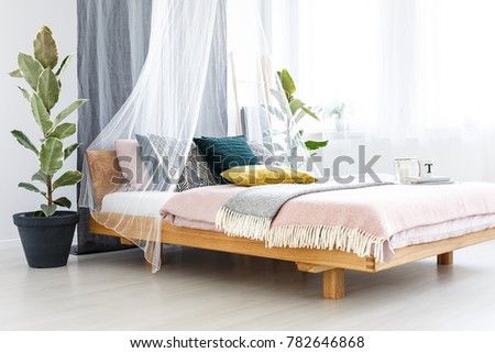 Blanket, yellow cushion and books on wooden bed with veil in pastel bedroom interior with ficus tree and candle