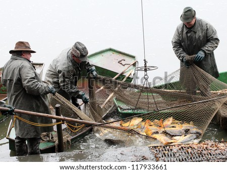BLATNA CZECH REPUBLIC - OCTOBER 7: unidentified fisherman enjoy harvest of pond Blatna on October 7, 2011. It is Czech's traditional fishing technology with a very long history dating back to 1550.