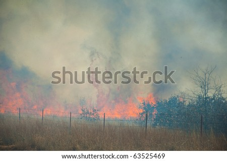 Blazing inferno, wildfire's rage - fire consuming everything in its way, flaming high up and blowing ashes and smoke up in the air in a fire on a rural area