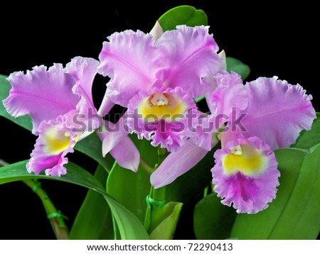 Blc. Spring Dawn 'Top Row' BM/JOGA - stock photo