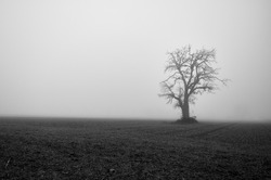 Bleak tree in a meadow in front of very foggy sky in a spooky black and white landscape.