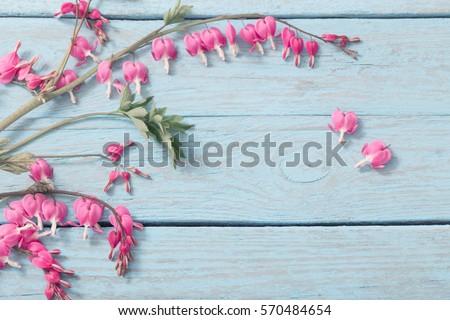 Bleeding heart flowers on wooden background #570484654