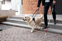 blind man with disability walking down the stairs with a guide dog in city streets, ygolden retriever leads the man, helps to navigate