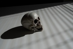 Blinds shadow on a plastic skull on a white table