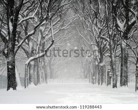 Blizzard in Central Park, New York