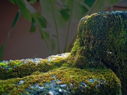 Block wall covered by green moss as a background texture with shallow depth of field