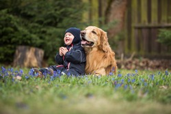 Blond big dog and baby boy in spring having fun