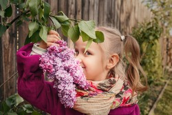 Blonde little girl holding a branch of lilac flowers. A child in the garden sniffs a lilac flower