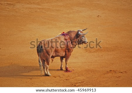 bloody brown bull at bullfight - stock photo