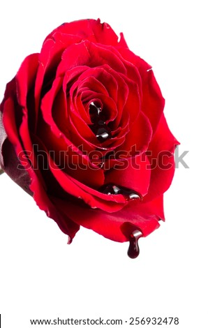 Royalty Free Red Rose With Blood Flowing Out Of Its 69028228 Stock