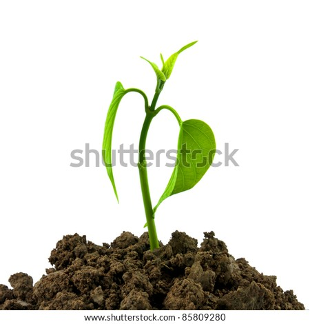 Bloom sprout from the soil isolated on white background, conservation concept