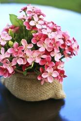 blooming beautiful pink flower