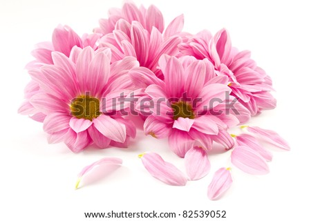 stock photo blooming beautiful pink flower isolated on white background 82539052 - Каталог — Фотообои «Цветы»