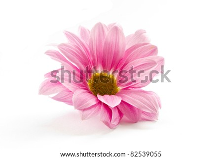 blooming beautiful pink flower isolated on white background