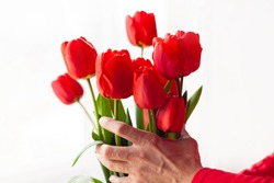 Blooming bouquet of amazing red tulips in male hands with natural sunlight on a window,selective focus.Bright high key flowers horizontal banner,greeting card.Interior Design romantic minimalism style