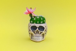 Blooming cactus plant and decorative Skull Planter on yellow background. Human Skull Head Design Flower Pot with green Succulent and Rose flower