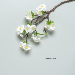 Blooming cherry branch (artificial) on a gray background. Creative layout. Spring tender background. Top view, flat lay