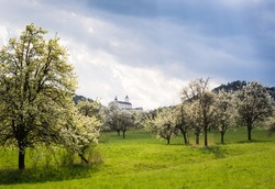 Blooming cherry trees in front of catle of Forchtenstein