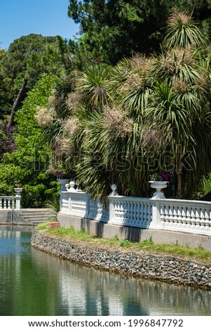Blooming Cordyline australis, commonly known as cabbage tree or cabbage-palm, on waterfront in Adler arboretum 'Southern Cultures'. White inflorescences with buds of Cordyline australis palm.  Stockfoto ©