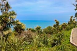 Blooming Cordyline australis trees (cabbage tree, cabbage-palm) on a background of the Black sea in Batumi botanical garden, Georgia