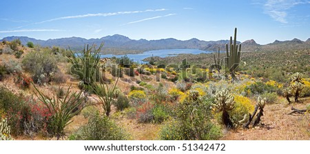 Blooming Desert, with Saguaros, and various Cacti around Bartlett Lake.