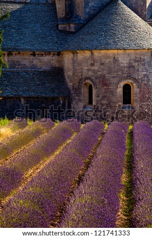 Blooming field of Lavender (Lavandula angustifolia) in front of Senanque Abbey, Gordes, Vaucluse, Provence-Alpes-Cote d'Azur, Southern France, France, Europe
