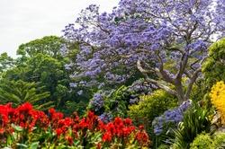 Blooming Flower in Royal Botanic Gardens in Sydney, Australia