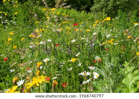 Blooming flower meadow with bee-friendly plants in May. A beautiful strip of flowers to promote local biodiversity. Stockfoto ©