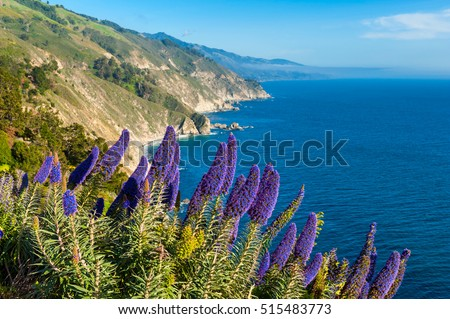 Blooming flowers along coastline of Big Sur California