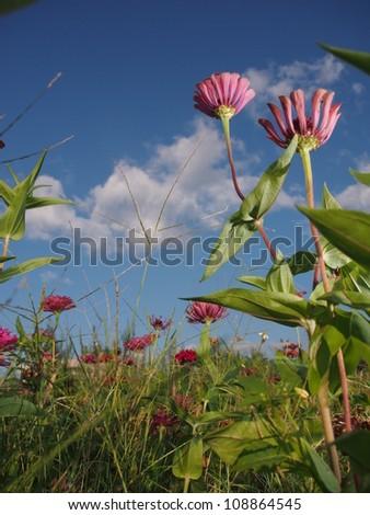 blooming flowers under blue sky