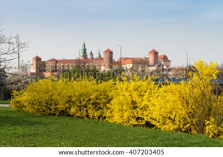 forsythia bush hedge free beautiful yellow blossoms of forsythia bush in garden photos
