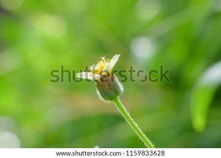 blooming grass flowers with green natural background.  #1159833628