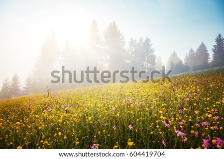 Blooming grazing land in the morning light. Picturesque day and gorgeous scene. Location place Carpathian, Ukraine, Europe. Perfect vacation outdoors. Climate change. Explore the world's beauty.