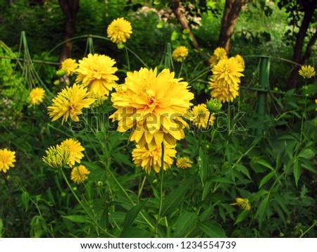 Free Photos Golden Balls Flowers Yellow Grass Avopix