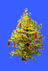 Blooming ochna tree decorated with red envelopes had Vietnamese calligraphy text means