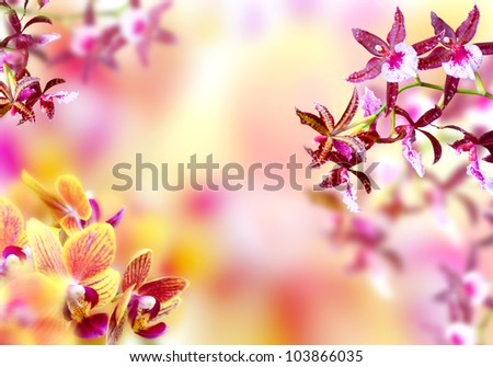 Blooming pink and yellow orchid background